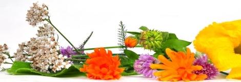 מטפלים בצמחי מרפא