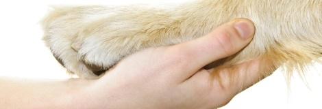 רפואה אלטרנטיבית לבעלי חיים