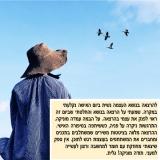 מוניקה ידלין - אימון אישי ודמיון מודרך בבאר שבע